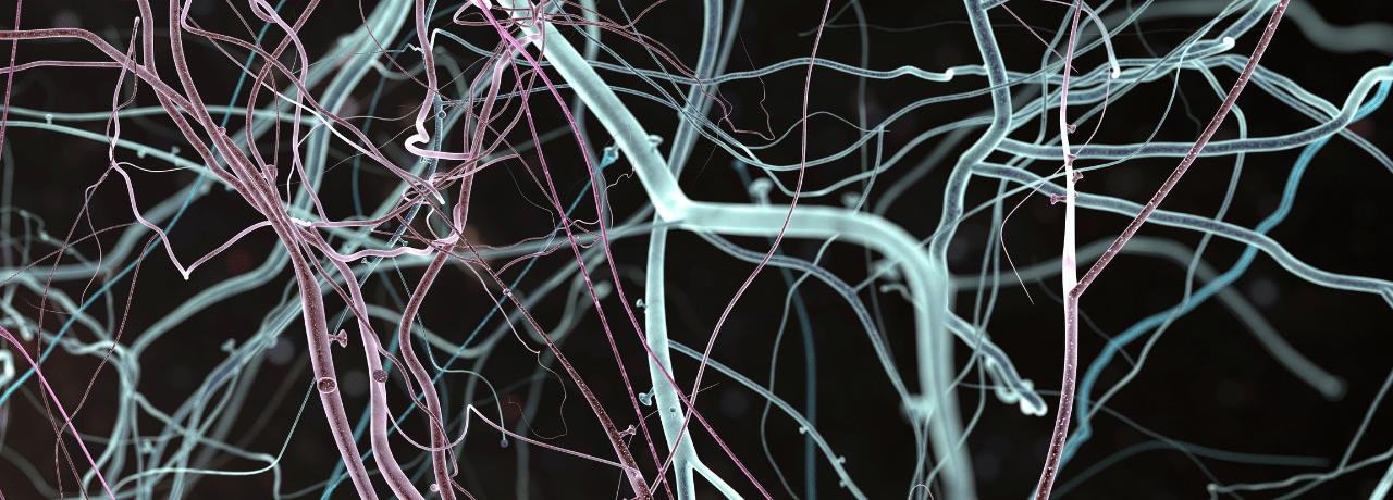 objetivos-del-neuromarketing